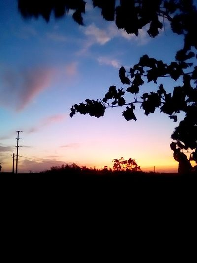 Silhouette Nature No People Sunset Landscape Agriculture Outdoors Cloud - Sky Rural Scene Sky Tree Day Beauty In Nature Nature Sun Blue Clear Sky Silence S