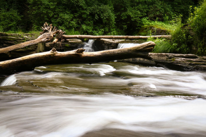 Tree in the water Water Nature Tree Outdoors Day No People Beauty In Nature Canonphotography Fineart_photo Waterfalls Beauty In Nature Tree Adventure Motion HDR Forest Scenics Waterfall River Canon70d Green Color Nature Long Exposure Longexposurephotography Long Exposure Shot EyeEm Selects