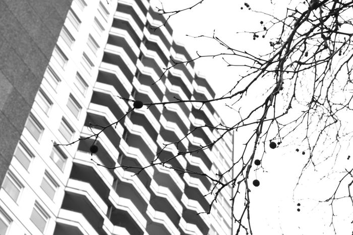 In my imagination cancer looks like this branches but may be the cancer is in the background Abstract Architecture Bare Tree Black & White Branch Building Building Exterior Contrasts Full Frame Modern Nature Vs City No People Outdoors Pattern Pattern Pieces Residential Building Urban