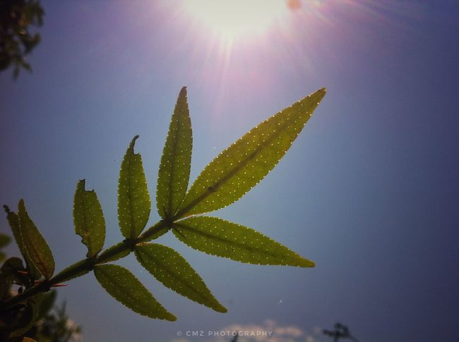 Sun Nature No People Beauty In Nature Outdoors Growth Sky Day Close-up Branch Politics And Government Leaf Landscape Blue Plant Part Mountain Adult Human Body Part Growth Smiling Freshness Grass Text Vacations Children Only