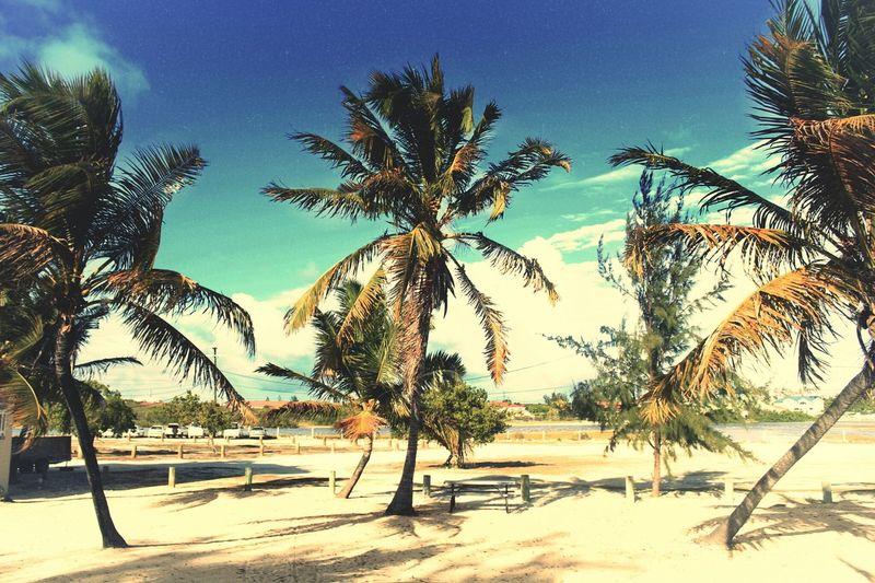 palm gathering~