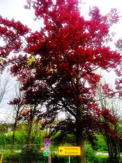 Tree Nature Red