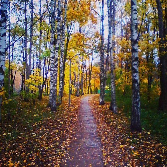 Муринский парк тропинка в парке осень листья желтые
