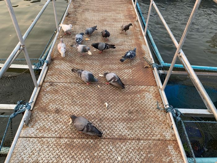 High Angle View Animal Group Of Animals Animal Themes Vertebrate Animal Wildlife Railing Day Bird Animals In The Wild Large Group Of Animals No People Architecture Pigeon Outdoors Transportation Staircase Water Nature Metal Flock Of Birds