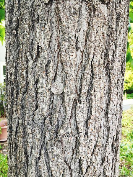 Money tree Money Tree Eye4photography  EyeEm Best Shots