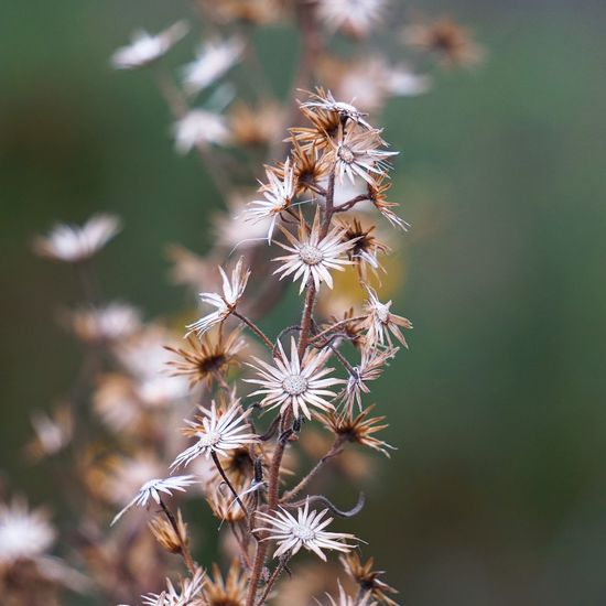 Close-up of wilted flowers