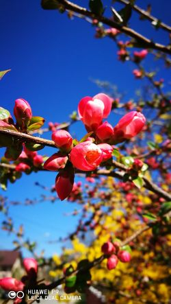 Nature Blooming Spring Tree Sky Outdoors Beauty In Nature Flower