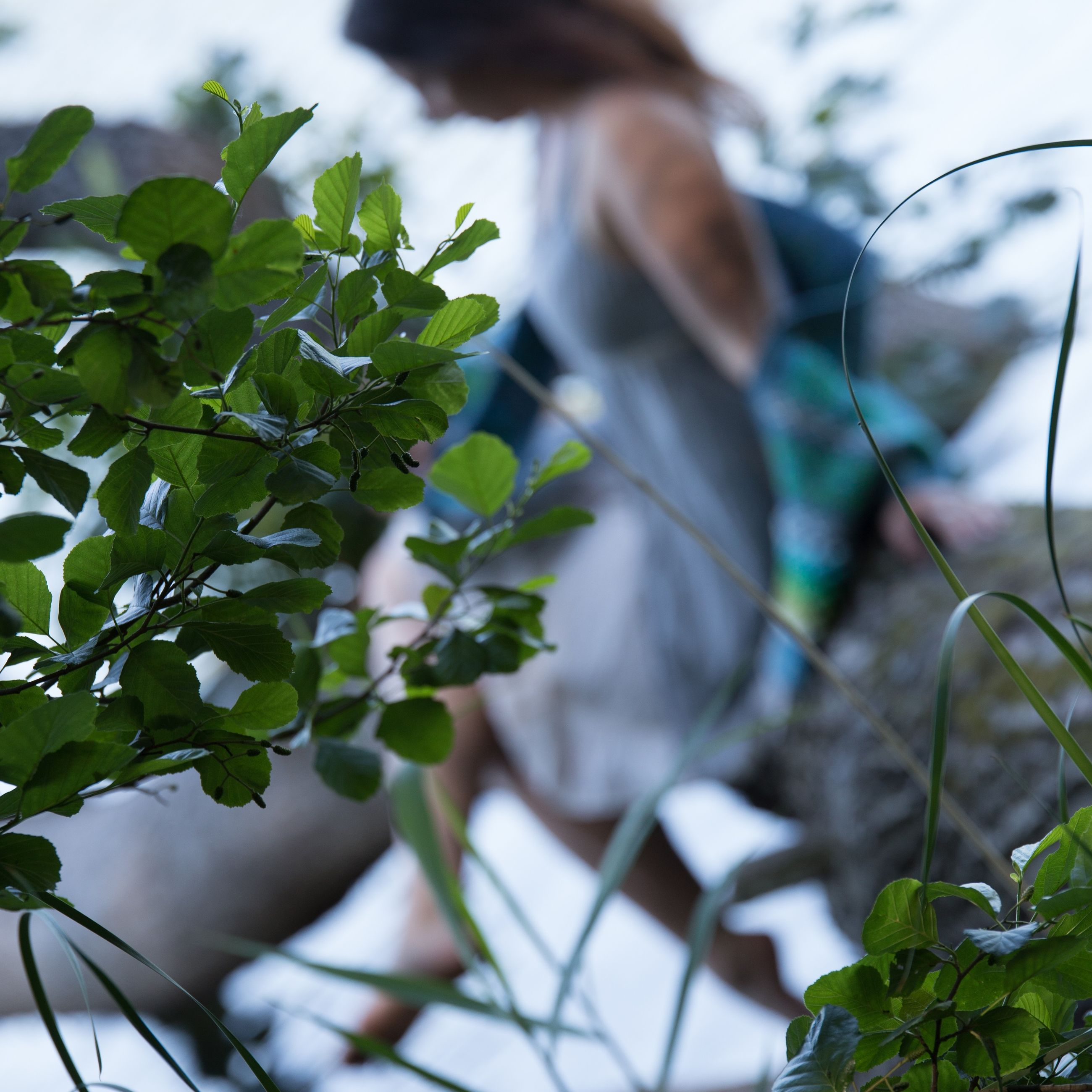 plant, leaf, plant part, growth, focus on foreground, green color, nature, day, close-up, selective focus, outdoors, one person, real people, tree, lifestyles, potted plant, beauty in nature