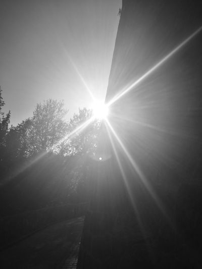 Sunbeam Lens Flare Sunlight Sun No People Beauty In Nature Nature Outdoors Day Sky Low Angle View Blackandwhite Black And White Black & White Black&white Black And White Collection