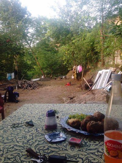 Fatsa Ordu Büyükkoç Köyü