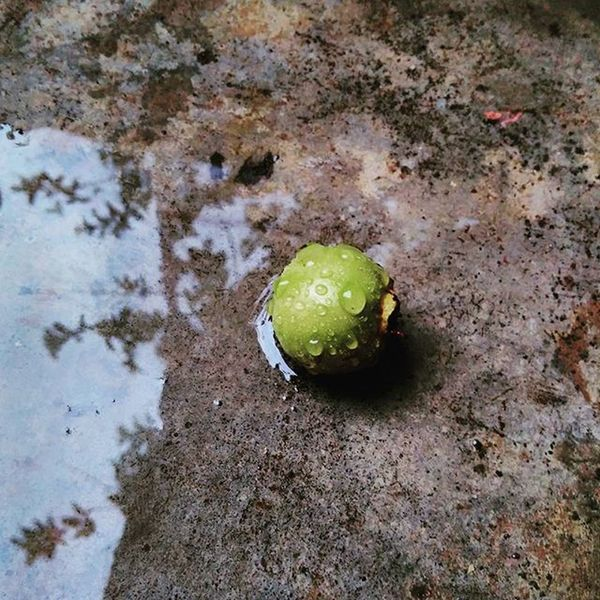 After the Rain ... ☺ Dropsoflife Shadowsofdarkness Nature Fruit Rain