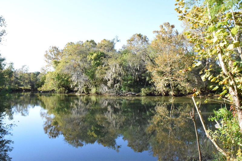 Pintlala Creek Burkville Al...Beauty In Nature Nature Non Urban Scene Outdoors Tranquil Scene Tranquility Water Reflections In The Water Pintlala Creek Jake's Fish Camp Burkville Alabama Alabama Outdoors