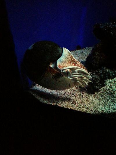 Eye Em Best Shots Eye For Photography Aquarium Monaco Sea