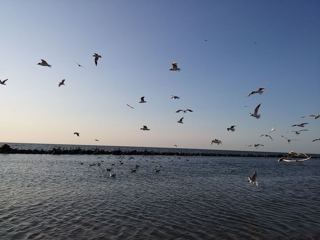 Sea Holiday Sky Nature  Sky Nature Photography Flying Bird Flock Of Birds Large Group Of Animals Animals In The Wild Animal Wildlife Sunset No People Mid-air Outdoors Nature Beauty In Nature Animal Themes Beach Day Flamingo Memories Nature Poland Beautiful Nature Done That.