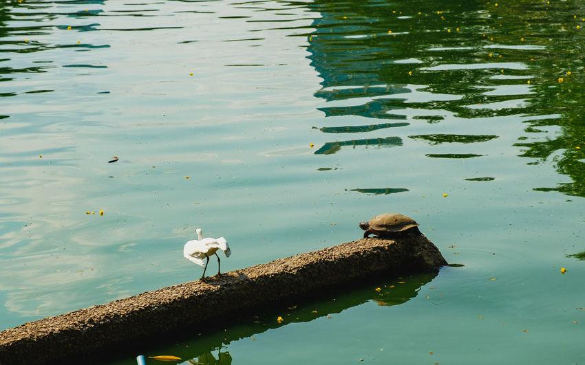High angle view of bird perching on lake