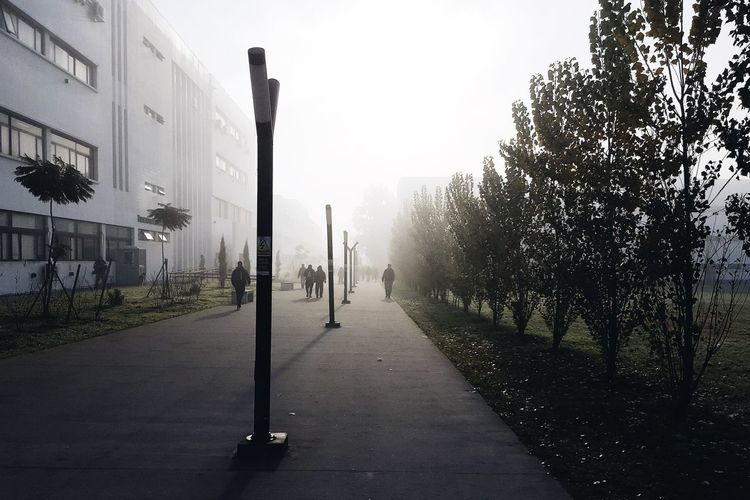 Street amidst trees in city against sky