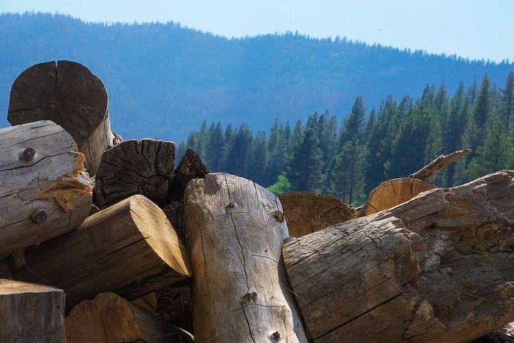Stack of logs on tree stump