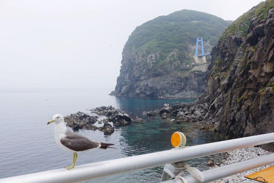 Korea Traveler EyeEm Korea Summer Sony Rx100 M3 Sea View Bird 갈매기 너는 아느뇨.