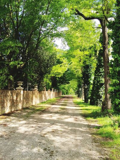 Entrance to Villa Vidmann Green Nature Historic Place Shadows & Lights Green Trees Green Leaves Nature Lover Beautiful Nature Nice Day Relaxing Colors Of Nature Check It Out
