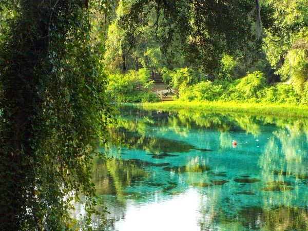 Rainbow Springs Dunnellon Florida 9Water Tree Reflection Tranquil Scene Tranquility Forest Scenics Waterfront Growth Beauty In Nature No People Environment Outdoors Swimming Area Relaxing Remote Spring Peace And Quiet Calm Majestic Non-urban Scene Tranquil Scene Nature