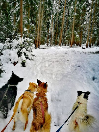 Snow Snow Winter Cold Temperature Domestic Animals Dog Animal Themes Nature Mammal Pets Weather Outdoors No People Day Tree Beauty In Nature Walking The Dog Snow ❄ Forest Photography DogDreams Forest Beauty In Nature Dogs Dogs Of EyeEm Walking The Dogs Winterscapes Shades Of Winter