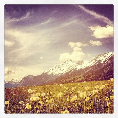 hawkbit Sky Blue Cloud White Mountain Austria Alps Lawn Österreich Meadows Oesterreich Alp
