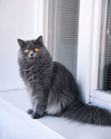 Cat Domestic Cat Fluffy Pet Balcony British Cat Animal Themes EyeEm Selects EyeEm Best Shots Pet Portraits