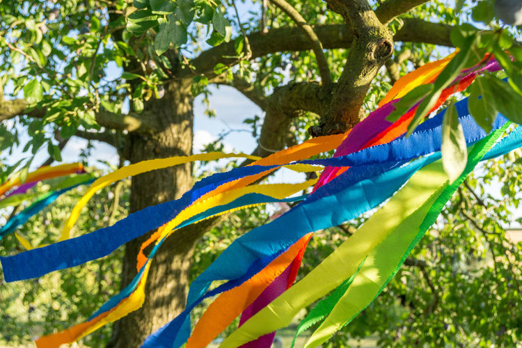 Low angle view of multi colored flags hanging on tree
