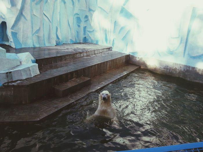 медведик ))))