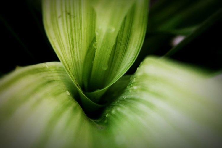Leaf 🍂