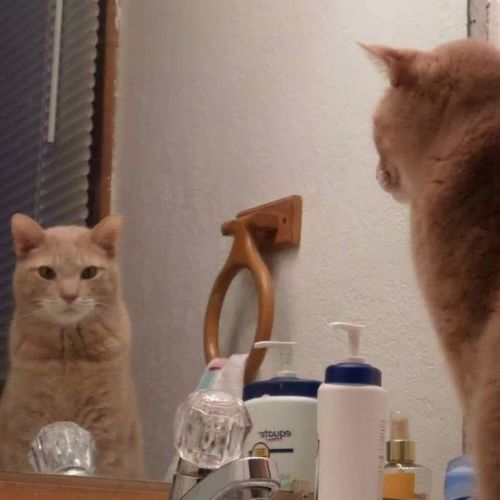 Mirror, Mirror on the wall... Meow Catlady Thefairestofthemall
