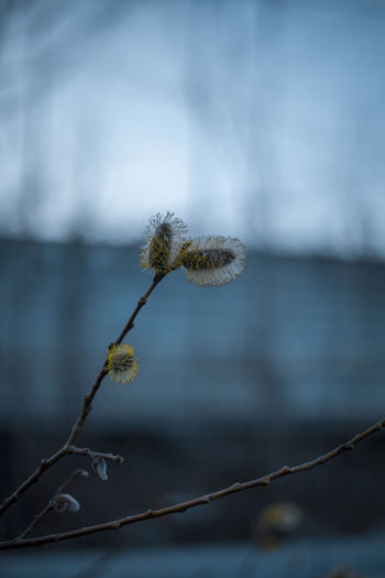Close-up of wilted plant against blurred background