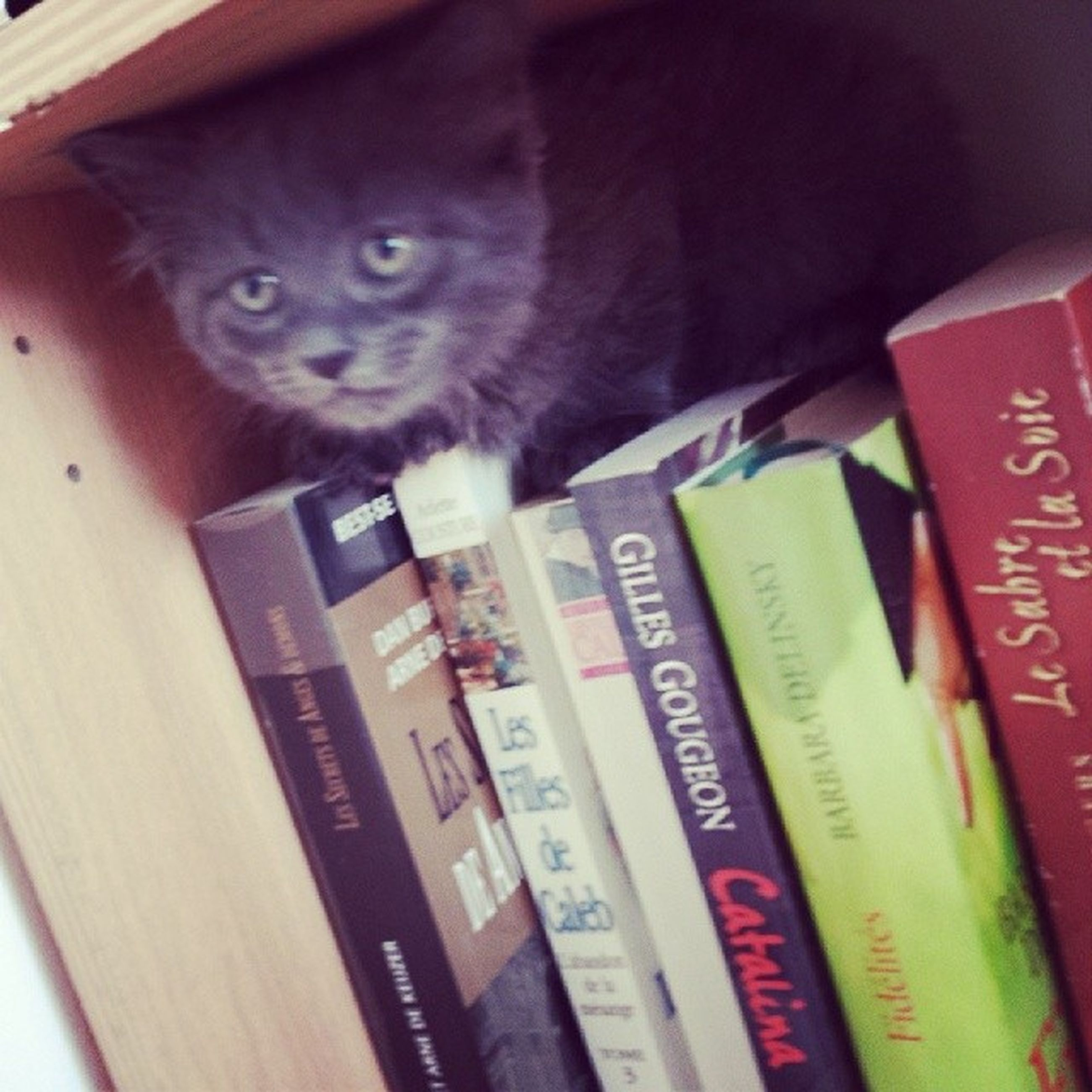 indoors, text, book, education, communication, close-up, western script, paper, high angle view, table, still life, wood - material, pen, variation, no people, shelf, selective focus, domestic cat, literature, choice