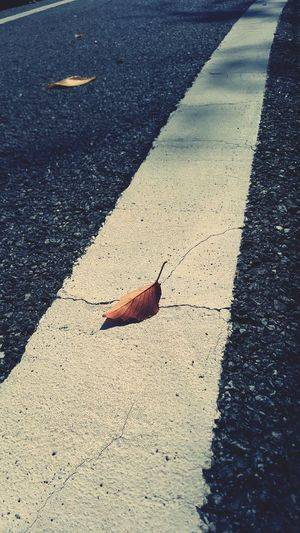 Lonely Fall Authum Strait Flow  Go Forward Water Shadow Sunlight Asphalt High Angle View Beach Fallen Leaves Dry