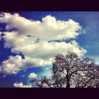 Tree Sky Skyporn Dbskyporn clouds cloudporn