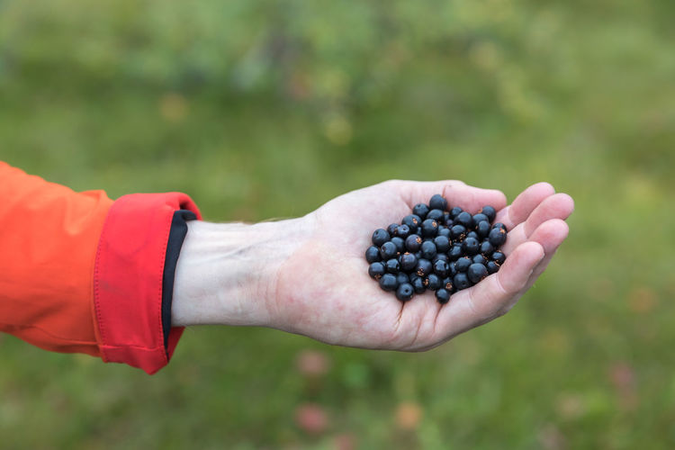Cropped hand of man holding berry fruits outdoors