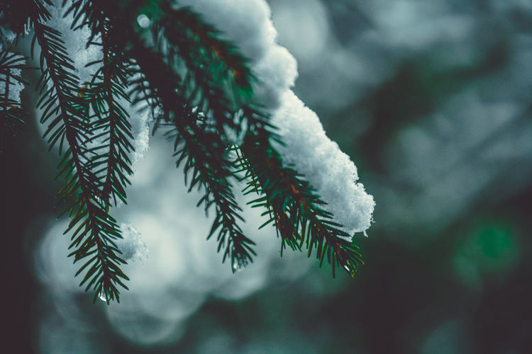 // get moody with me // Christmas Ice Tree Beauty In Nature Branch Christmas Tree Close-up Cold Temperature Day Focus On Foreground Fragility Freshness Frost Frozen Green Color Growth Nature No People Outdoors Plant Snow Tree Weather Winter EyeEm Ready