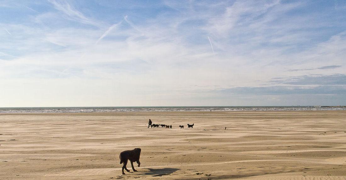 Dogs Animal Themes Beach Dogs On Beach Domestic Animals Group Of Animals Horizon Pets Sand Scenics - Nature Sea Sky