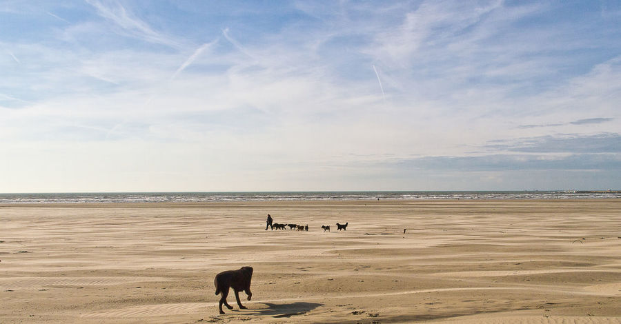 Dogs Animal Themes Beach Dogs On Beach Domestic Animals Group Of Animals Horizon Pets Sand Scenics - Nature Sea Sky