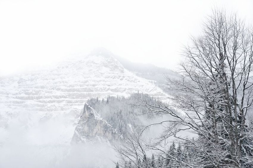 Tree Snow Covered No People Mountain Snow Rural Scene Backgrounds Sky Landscape Close-up Snowcapped Snowcapped Mountain Cold Temperature Deep Snow Snow Covered Foggy Snowfall Weather Mountain Range Winter Frozen