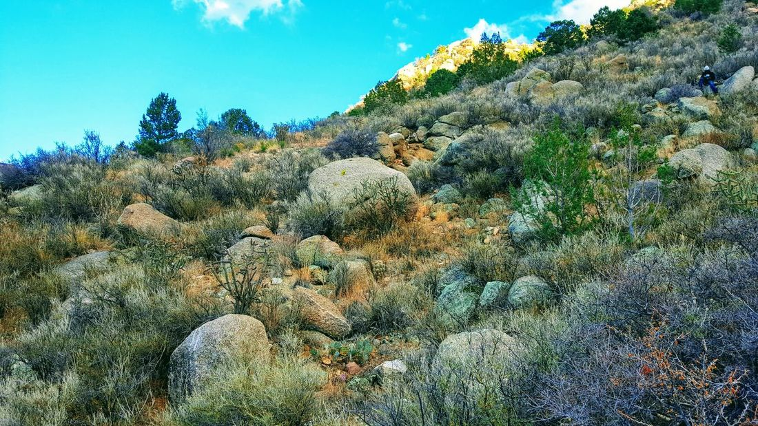 Day Rocks Sunny Day Scenics Nature Outdoors Hiking, Mountains, Adventure Sandia Mountain Dry Landscape Adventure Mountain Sunny Travel Mountain Range Rock Activity One Person Black Man