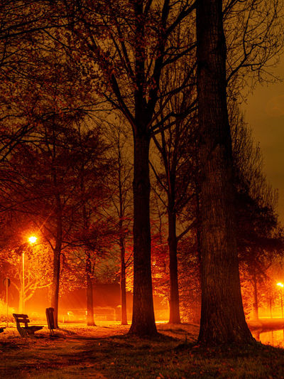 Bare trees in illuminated at night