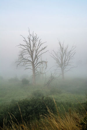 Beauty In Nature Day Environment Field Fog Grass Growth Hazy  Isolated Land Landscape Nature No People Non-urban Scene Outdoors Plant Scenics - Nature Sky Solitude Tranquil Scene Tranquility Tree