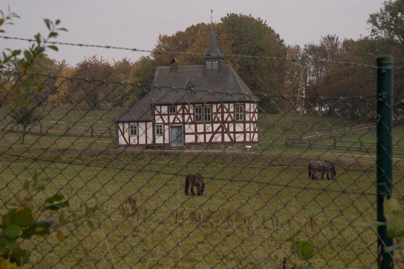 Walk around the LWL Museum - in the morning, before the rain started to fall Animal Themes Autumn Church Day Domestic Animals Fence Fence Post Horses Landscape Mammal Morning Museum Nature No People Outdoors Pasture Sky Tranquility Tree Two Animals