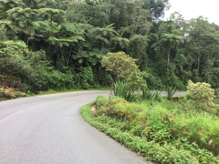 Road trip Plant Tree Growth Green Color Road Beauty In Nature Transportation