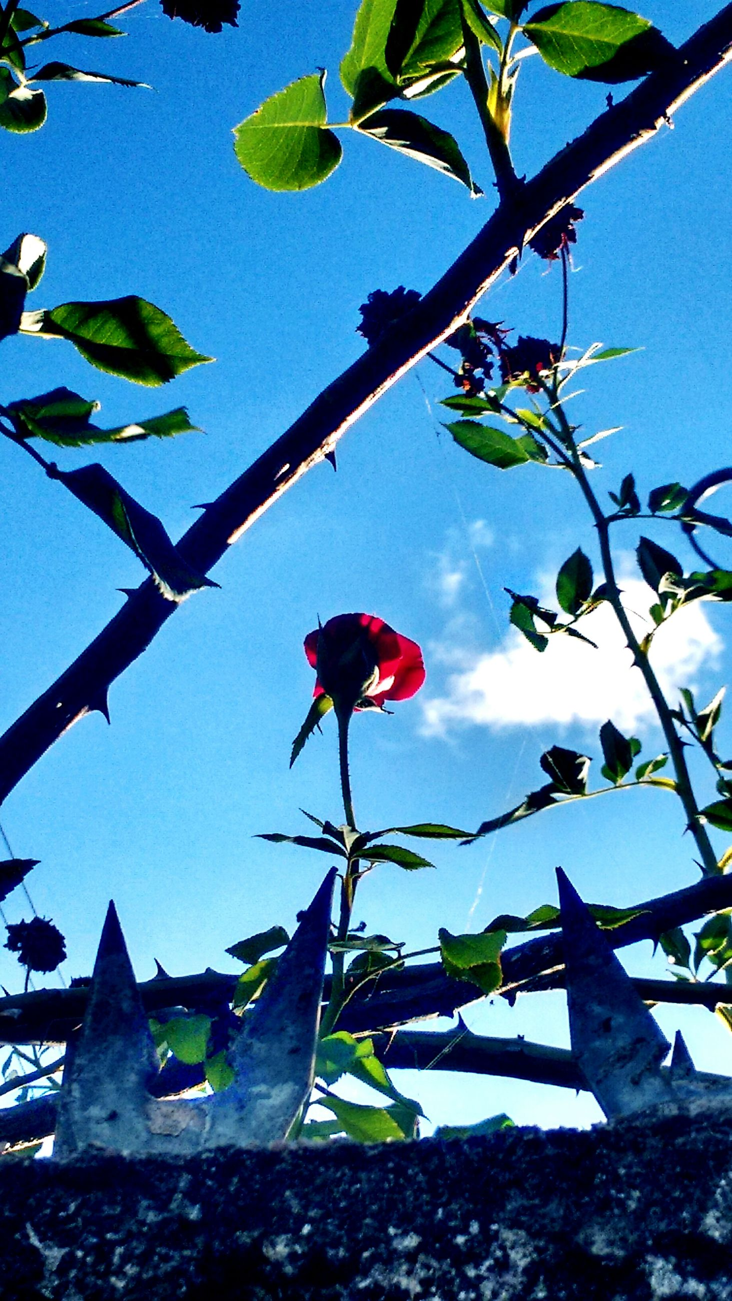 flower, leaf, freshness, low angle view, growth, fragility, plant, branch, petal, nature, clear sky, blooming, sky, beauty in nature, pink color, stem, built structure, day, outdoors, no people
