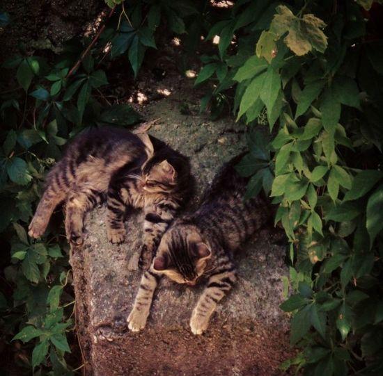 Cat Cats Cat Lovers Cats Of EyeEm Cat Sleeping