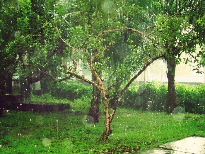 Belong Anywhere Raining Outside at Chittagong Hill Top