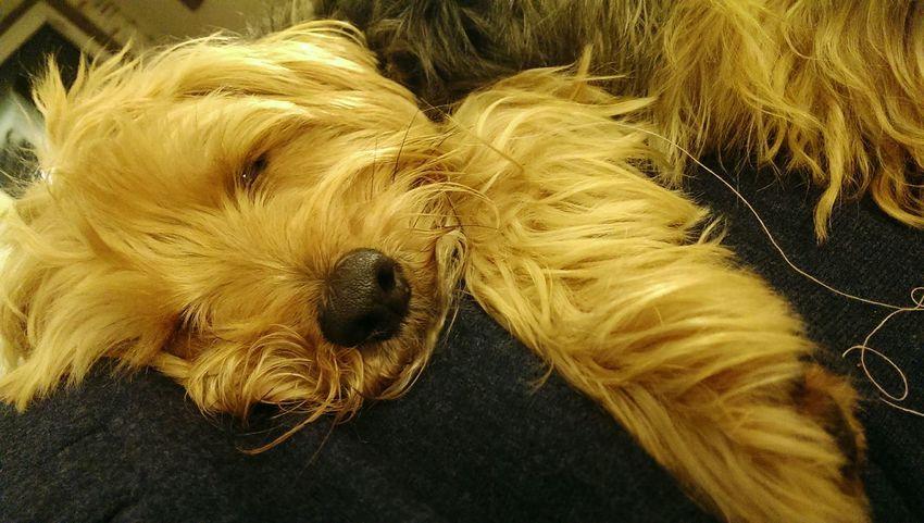 Dog Suprise Dog Dog Life My Dog Spring Dog I Love My Dog Hallo World Dog Love You Dog Dog❤