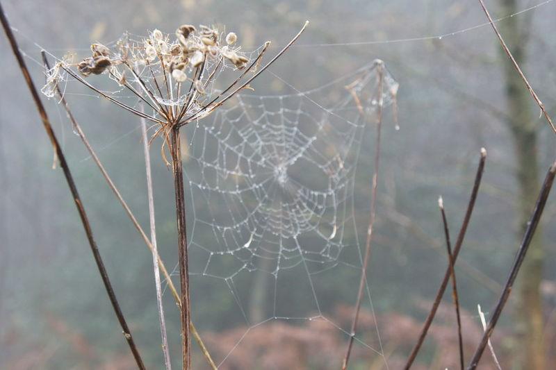 Close-Up Of Cob Web On Stems